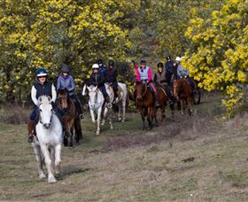 Burnelee Excursions on Horseback - Accommodation Mooloolaba