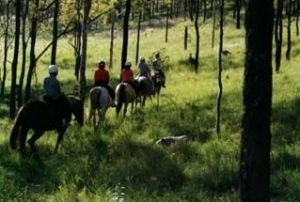 Hunter Valley Horse Riding and Adventures - Accommodation Mooloolaba